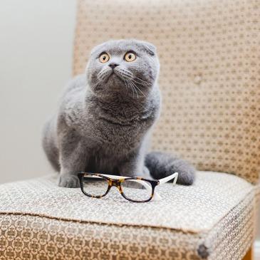 edie et watson chat